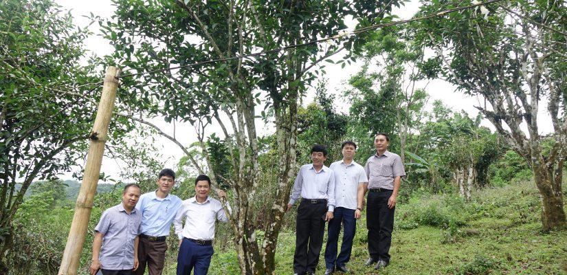 Khảo sát Hợp tác xã Sơn Trà – Tuyên Quang để Xây dựng mô hình Hợp tác xã sản xuất, kinh doanh gắn với chuỗi giá trị