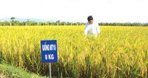 Bình Thuận: Tích cực tạo điều kiện thuận lợi cho kinh tế Hợp tác xã phát triển