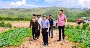 Chủ tịch Nguyễn Ngọc Bảo thăm và làm việc tại một số HTX tại Gia Lai