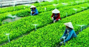 Đề xuất cơ chế chính sách ưu đãi thiết thực cho phát triển HTX