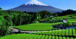 Giới thiệu về Tổ chức Hợp tác nông dân châu Á (AFGC)