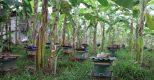 Hòa Bình: HTX nông nghiệp Dân Chủ sản xuất mật ong chất lượng cao