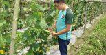 HTX Định Trung: Hiệu quả từ sản xuất an toàn rau hữu cơ