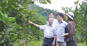 HTX Hà Phong thí điểm chuỗi giá trị cho cây có múi