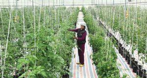 HTX Huyền Tụng bảo vệ môi trường trong sản xuất nông nghiệp