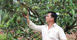 HTX kiểu mới giải quyết đầu ra cho nông sản