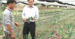 HTX Ninh Phúc: Đẩy mạnh sản xuất, không quên môi trường