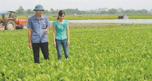 HTX sản xuất rau theo quy trình thực hành nông nghiệp tốt