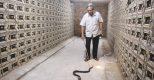 HTX Thịnh Hưng thu hàng chục tỷ đồng từ nuôi rắn