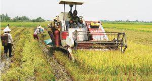 Đầu tư cho nông nghiệp: Cần đúng mức và đúng chỗ
